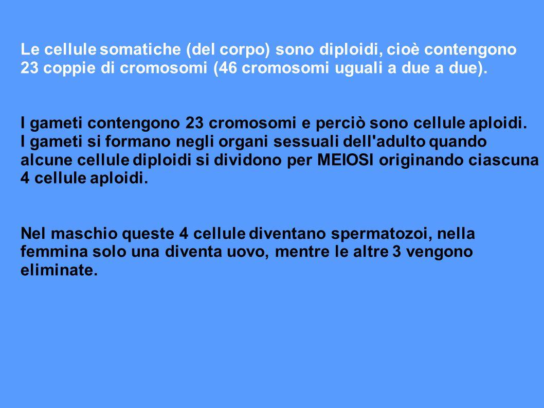 LA DETERMINAZIONE DEL SESSO - L uomo e la donna differiscono per la coppia di cromosomi sessuali (X e Y).