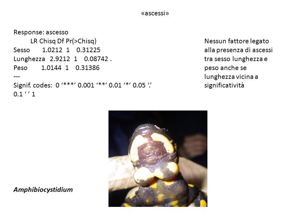 «ascessi» Amphibiocystidium Response: ascesso LR Chisq Df Pr(>Chisq) Sesso 1.0212 1 0.31225 Lunghezza 2.9212 1 0.08742.