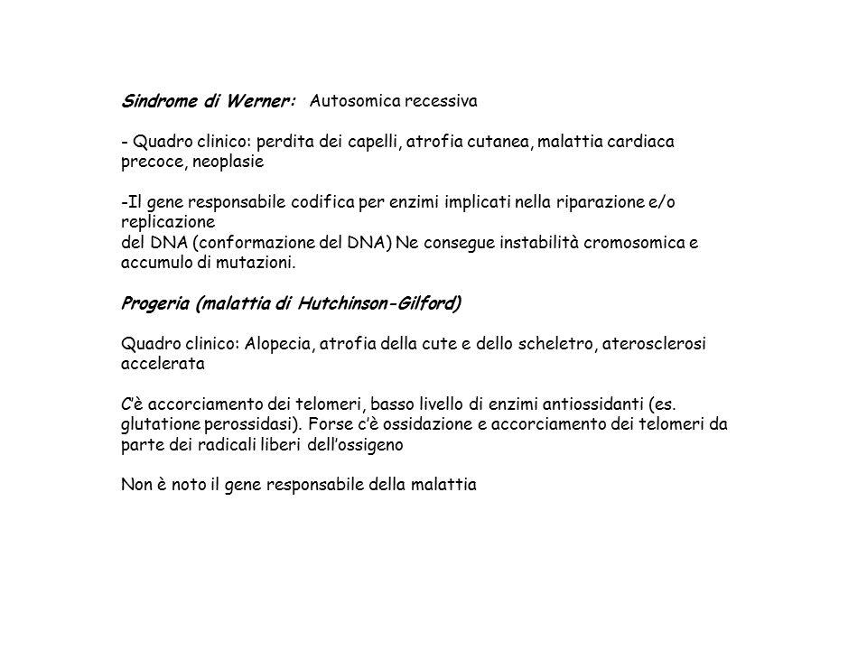 Sindrome di Werner: Autosomica recessiva - Quadro clinico: perdita dei capelli, atrofia cutanea, malattia cardiaca precoce, neoplasie -Il gene respons