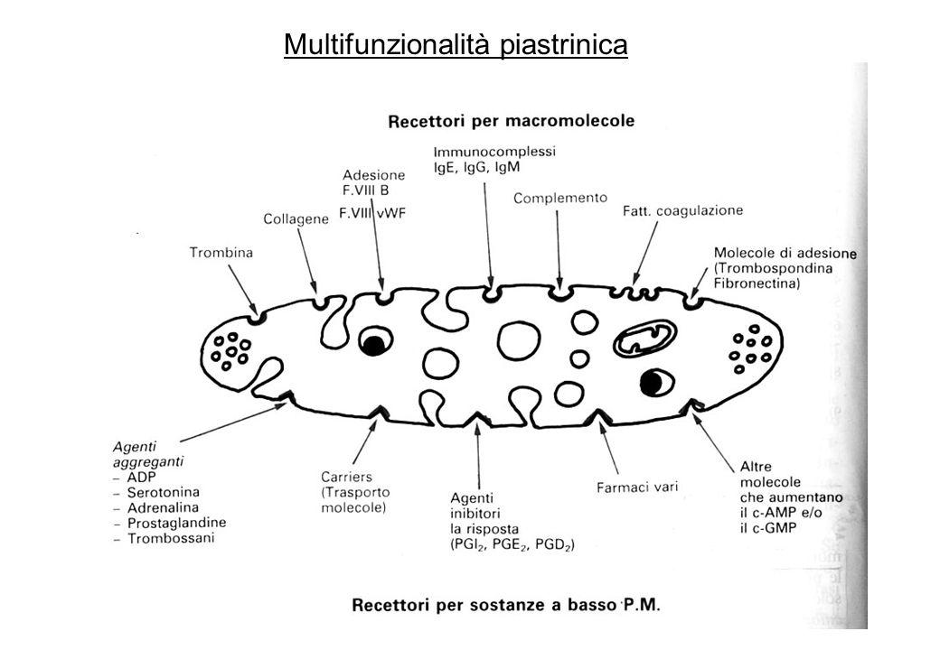 alterazioni si hanno per variazioni numeriche - trombocitopenia (si parla di trombocitopenia o piastrinopenia quando si ha una diminuzione inferiore a 150.000 mm 3 ) e trombocitosi - o per compromissione della funzione piastrinica - trombocitopatie trombocitosi si verifica dopo crisi emolitiche, emorragie, splenectomia, atrofia della milza, per aumentata produzione midollare (trombocitemia) ai fini clinici vengono considerate alcune funzioni piastriniche come: –aggregabilità »curve di aggregazione di Born »dosaggio dei nucleotidi adeninici (per Storage Pool Disease e Aspirin-like syndrome) –adesività »ritenzione piastrinica a microsfere di vetro (poco usata) Alterazioni piastriniche