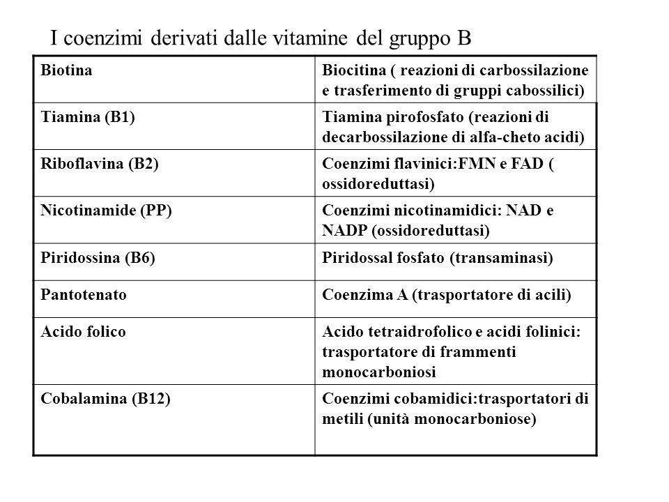 I coenzimi derivati dalle vitamine del gruppo B BiotinaBiocitina ( reazioni di carbossilazione e trasferimento di gruppi cabossilici) Tiamina (B1)Tiam