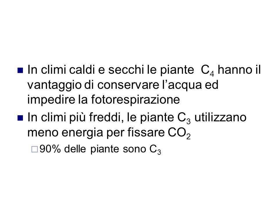 In climi caldi e secchi le piante C 4 hanno il vantaggio di conservare l'acqua ed impedire la fotorespirazione In climi più freddi, le piante C 3 utilizzano meno energia per fissare CO 2  90% delle piante sono C 3