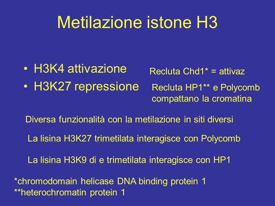 Metilazione istone H3 H3K4 attivazione H3K27 repressione Diversa funzionalità con la metilazione in siti diversi Recluta Chd1* = attivaz Recluta HP1**