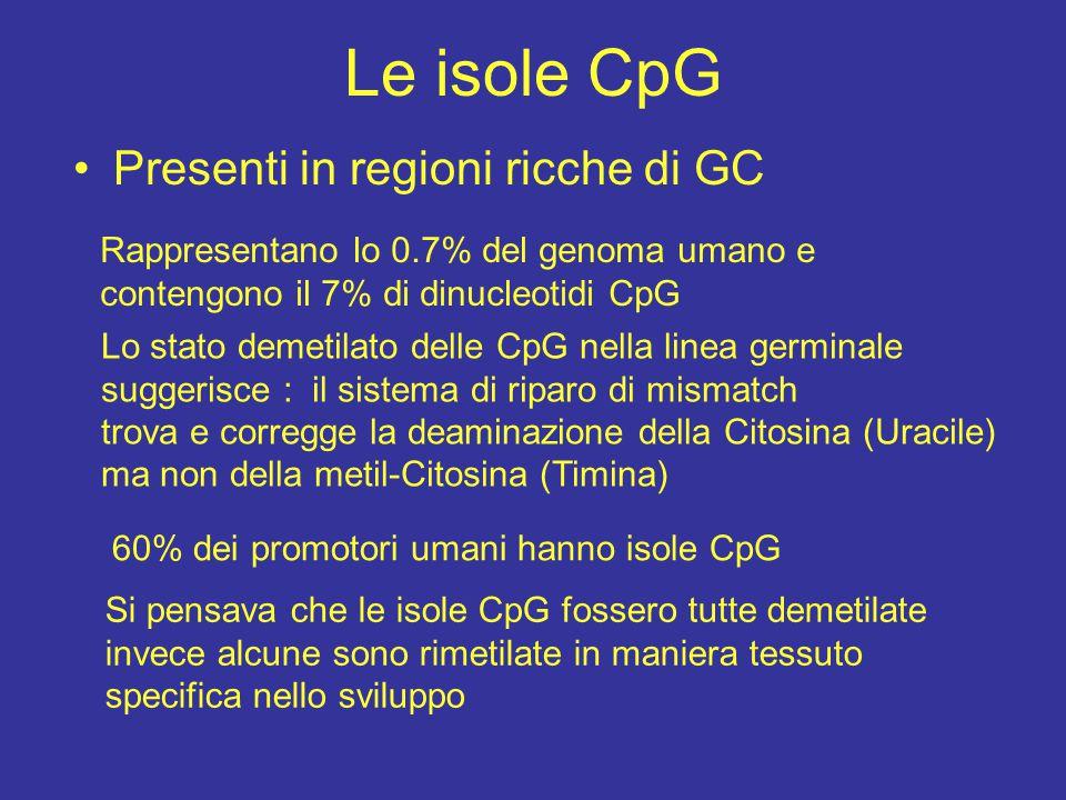 Le isole CpG Presenti in regioni ricche di GC Rappresentano lo 0.7% del genoma umano e contengono il 7% di dinucleotidi CpG Lo stato demetilato delle