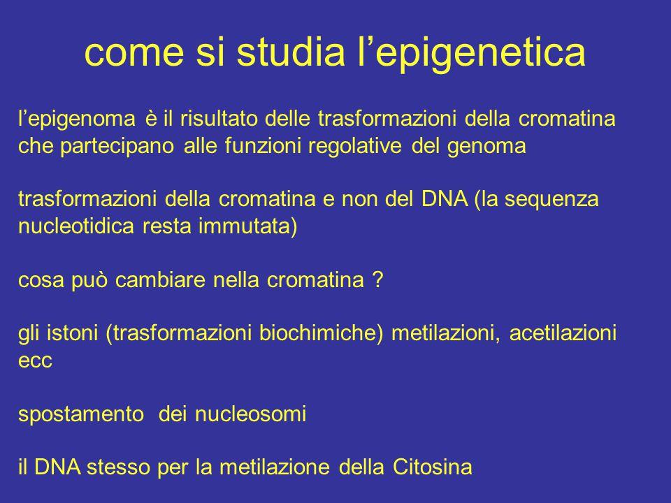 come si studia l'epigenetica l'epigenoma è il risultato delle trasformazioni della cromatina che partecipano alle funzioni regolative del genoma trasf