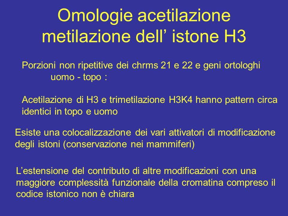 Omologie acetilazione metilazione dell' istone H3 Porzioni non ripetitive dei chrms 21 e 22 e geni ortologhi uomo - topo : Acetilazione di H3 e trimet