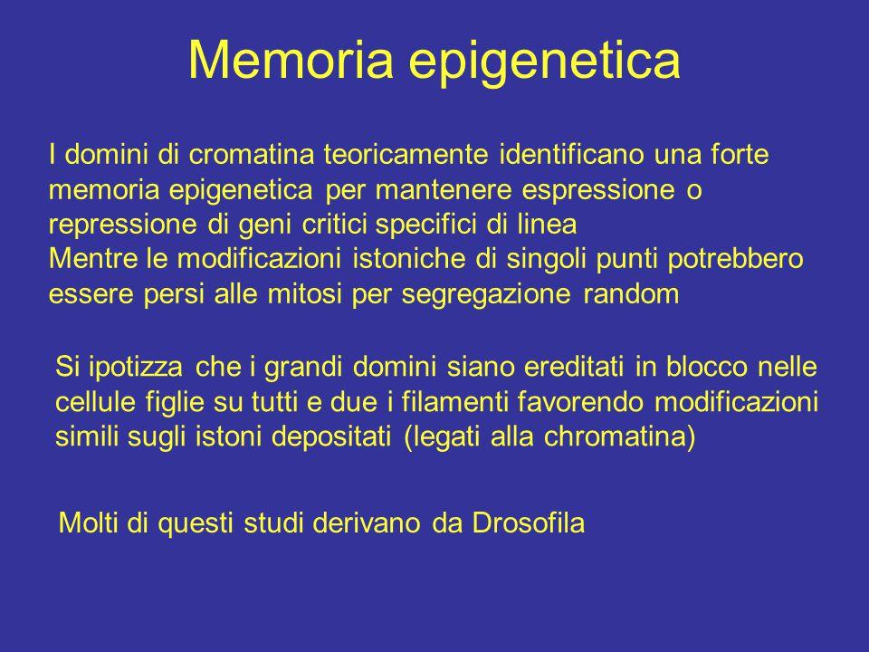 Memoria epigenetica I domini di cromatina teoricamente identificano una forte memoria epigenetica per mantenere espressione o repressione di geni crit
