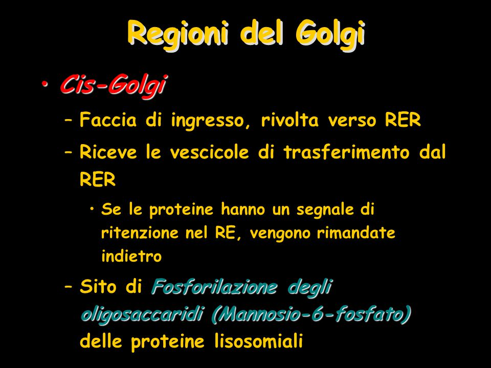 Regioni del Golgi Cis-GolgiCis-Golgi –Faccia di ingresso, rivolta verso RER –Riceve le vescicole di trasferimento dal RER Se le proteine hanno un segnale di ritenzione nel RE, vengono rimandate indietro Fosforilazione degli oligosaccaridi (Mannosio-6-fosfato) –Sito di Fosforilazione degli oligosaccaridi (Mannosio-6-fosfato) delle proteine lisosomiali