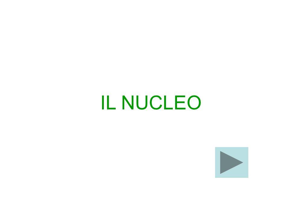 L'APPARATO DI GOLGI: il nome di questo organulo deriva da quello dello scopritore Camillo Golgi che lo mise in evidenza nel 1898.