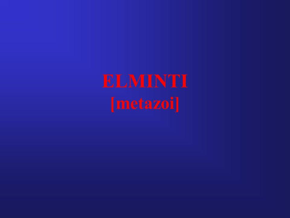 ELMINTI [metazoi]
