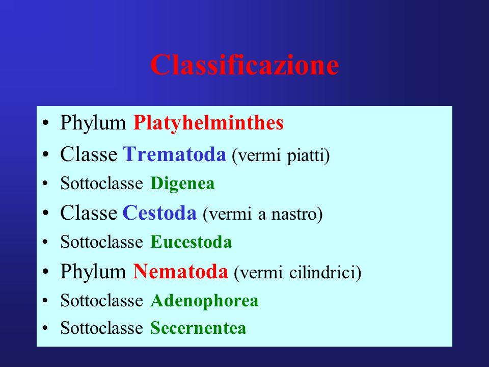 Classificazione Phylum Platyhelminthes Classe Trematoda (vermi piatti) Sottoclasse Digenea Classe Cestoda (vermi a nastro) Sottoclasse Eucestoda Phylum Nematoda (vermi cilindrici) Sottoclasse Adenophorea Sottoclasse Secernentea