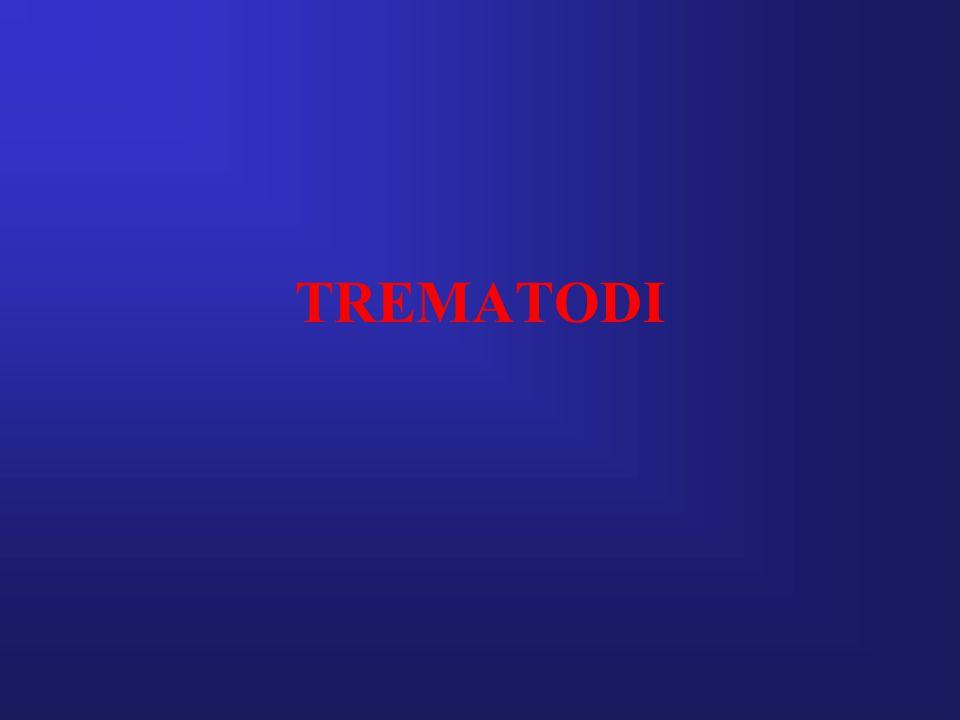 TREMATODI