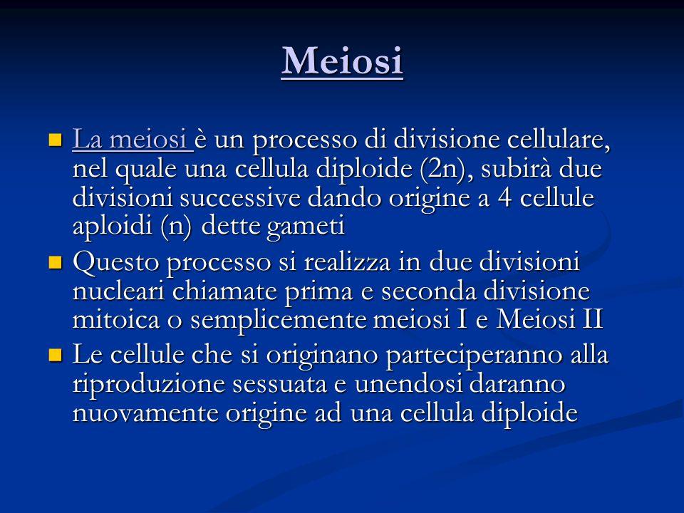 MMMM eeee iiii oooo ssss iiii L L aaaa m m m m eeee iiii oooo ssss iiii è è è è è un processo di divisione cellulare, nel quale una cellula diploide (2n), subirà due divisioni successive dando origine a 4 cellule aploidi (n) dette gameti Questo processo si realizza in due divisioni nucleari chiamate prima e seconda divisione mitoica o semplicemente meiosi I e Meiosi II Le cellule che si originano parteciperanno alla riproduzione sessuata e unendosi daranno nuovamente origine ad una cellula diploide