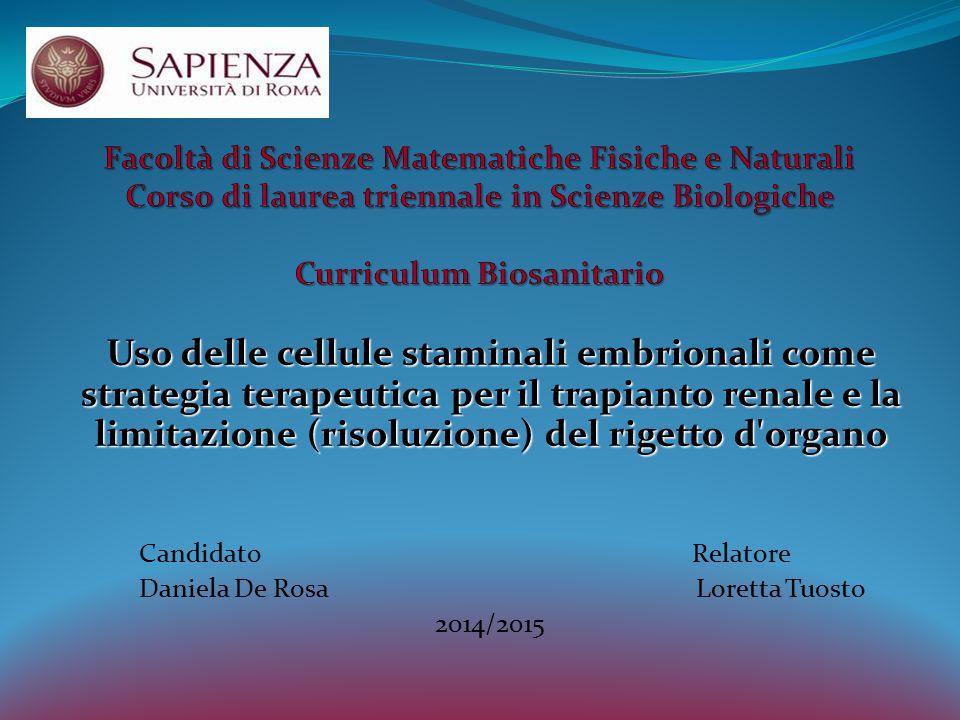 Uso delle cellule staminali embrionali come strategia terapeutica per il trapianto renale e la limitazione (risoluzione) del rigetto d'organo Candidat