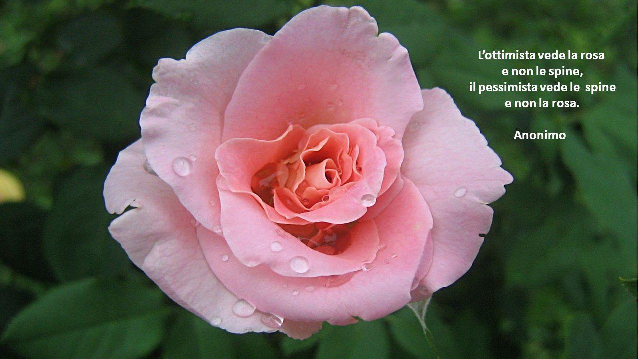 Prendi l'aspetto del fiore innocente, ma sii il serpente sotto d'esso. William Shakespeare