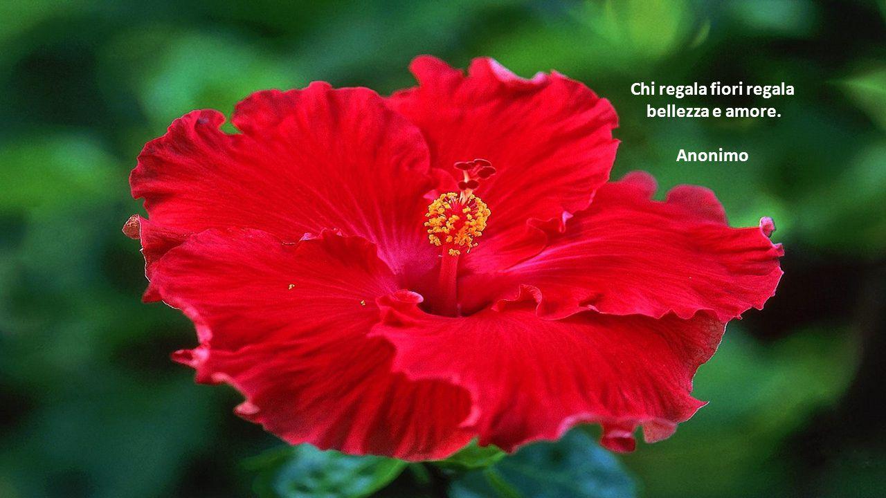 L'ottimista vede la rosa e non le spine, il pessimista vede le spine e non la rosa. Anonimo