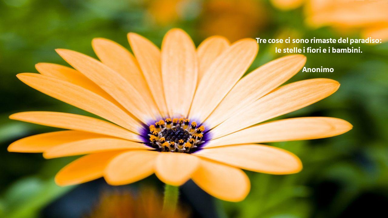 Tre cose ci sono rimaste del paradiso: le stelle i fiori e i bambini. Anonimo