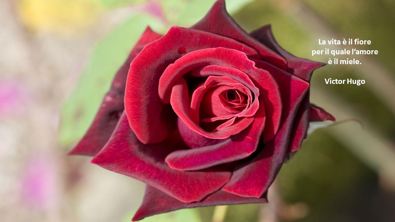 La vita è il fiore per il quale l'amore è il miele. Victor Hugo