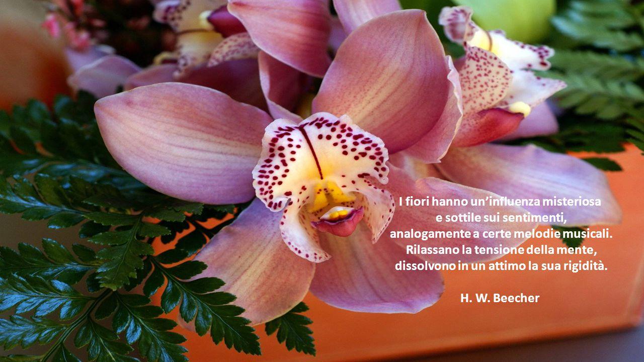 I fiori hanno un'influenza misteriosa e sottile sui sentimenti, analogamente a certe melodie musicali.
