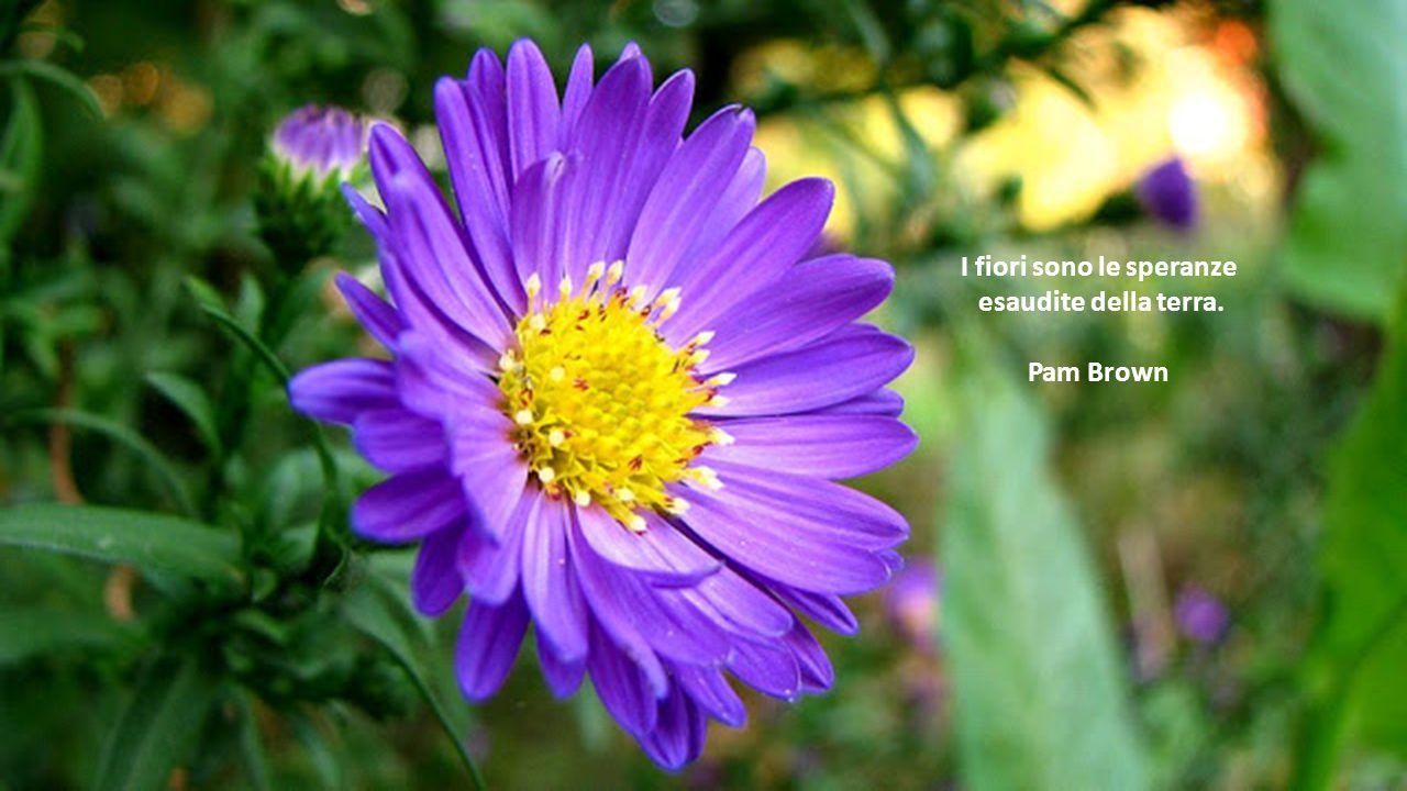 I fiori hanno un'influenza misteriosa e sottile sui sentimenti, analogamente a certe melodie musicali. Rilassano la tensione della mente, dissolvono i