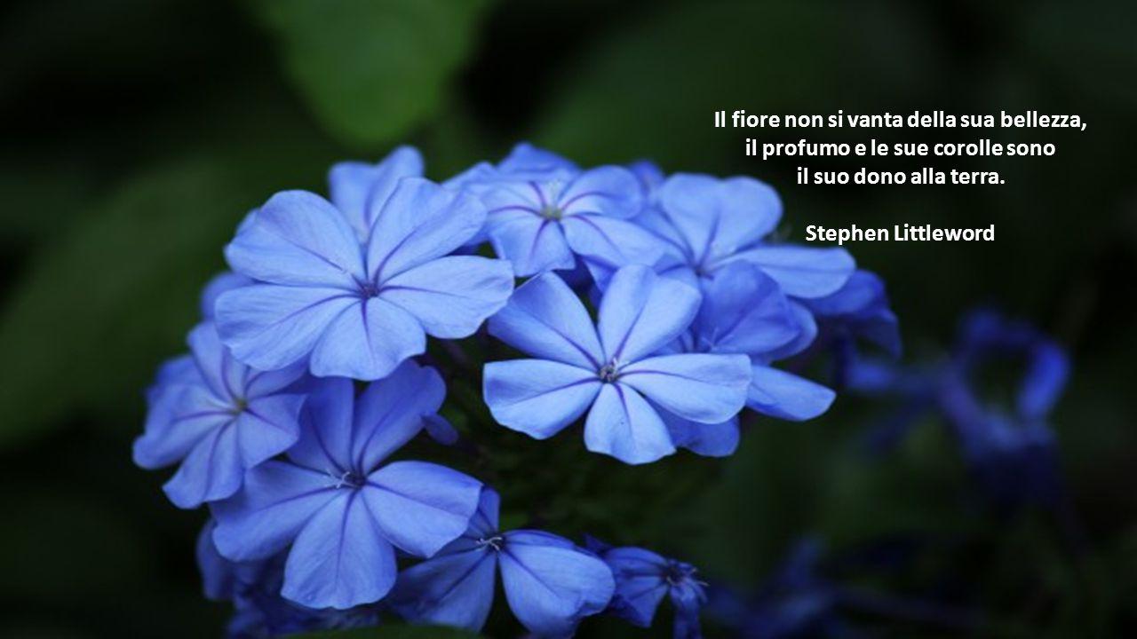 Il fiore non si vanta della sua bellezza, il profumo e le sue corolle sono il suo dono alla terra.
