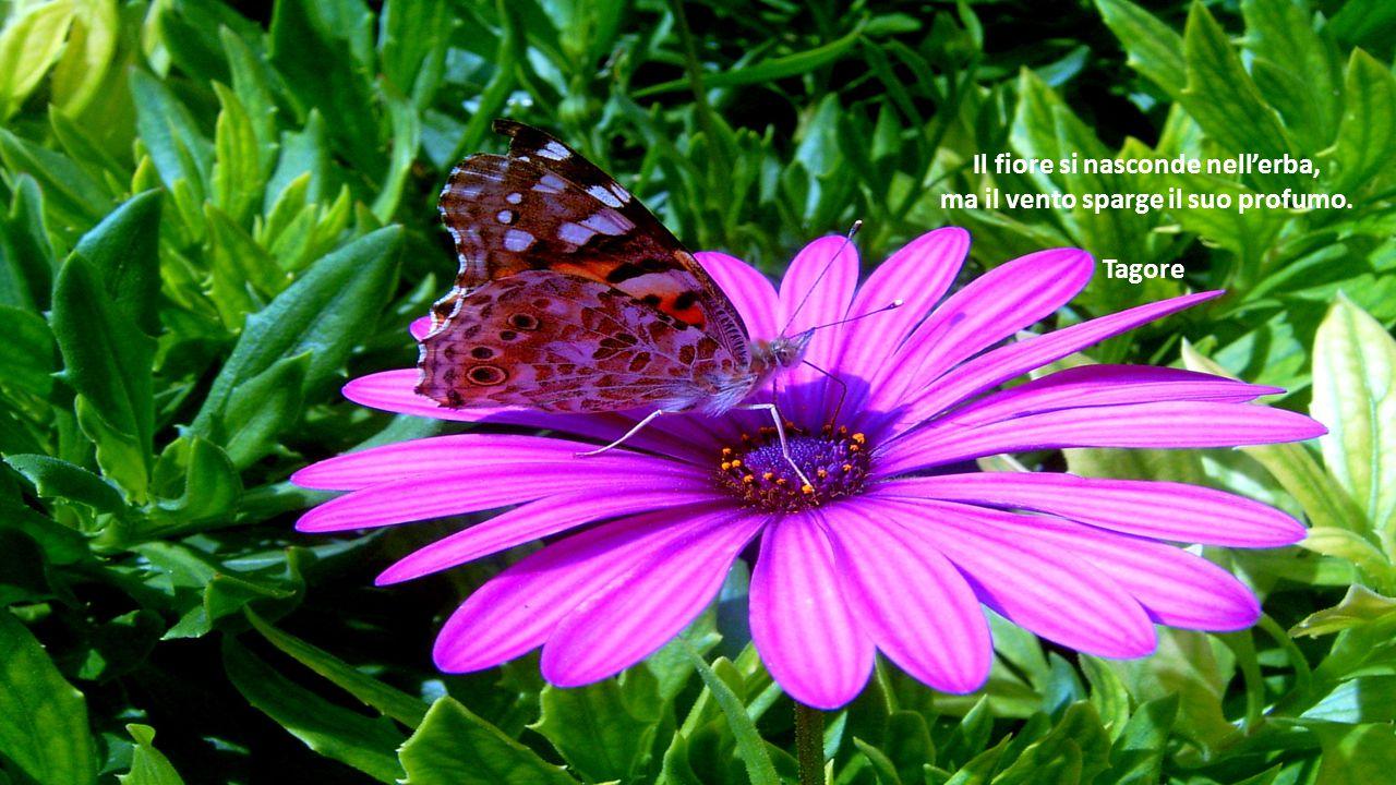 Il fiore si nasconde nell'erba, ma il vento sparge il suo profumo. Tagore