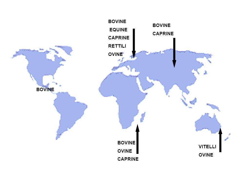 BOVINE EQUINE CAPRINE RETTILI OVINE BOVINE CAPRINE BOVINE OVINE CAPRINE VITELLI OVINE