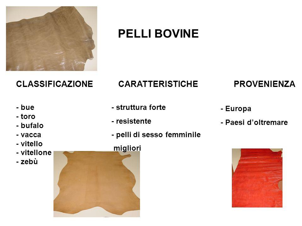 PELLI BOVINE - bue - toro - bufalo - vacca - vitello - vitellone - zebù CLASSIFICAZIONECARATTERISTICHE - struttura forte - resistente - pelli di sesso