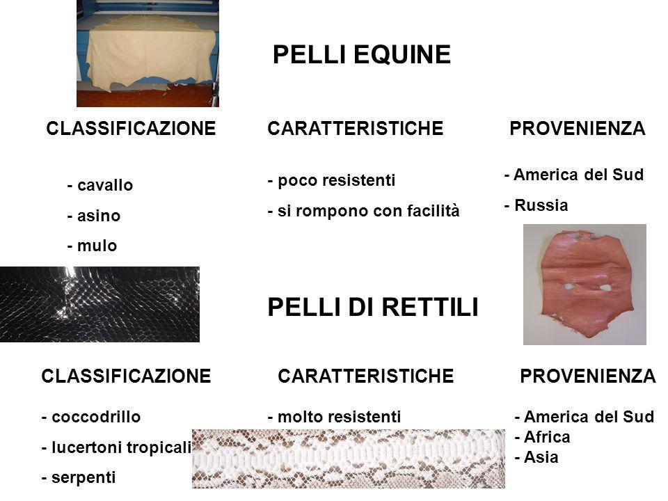 PELLI EQUINE CLASSIFICAZIONE - cavallo - asino - mulo CARATTERISTICHE - poco resistenti - si rompono con facilità PROVENIENZA - America del Sud - Russ