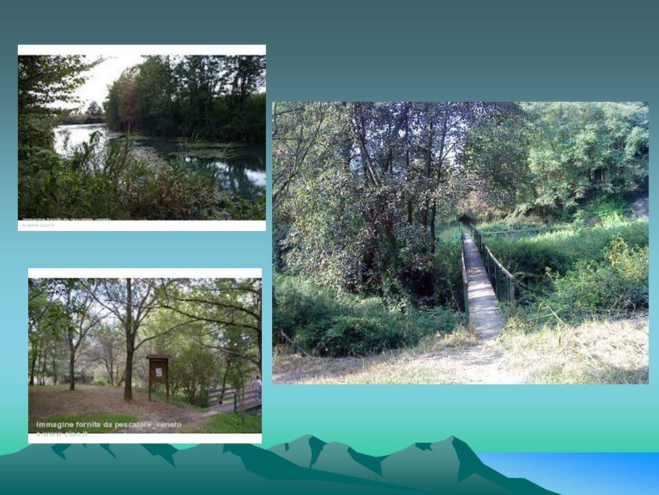 In località laghetto, lo Strone, determina una zona umida e boscosa ricca di una variegata flora e rifugio-per svariate specie di uccelli e di mammiferi.