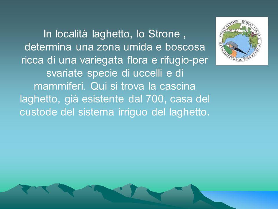 In località laghetto, lo Strone, determina una zona umida e boscosa ricca di una variegata flora e rifugio-per svariate specie di uccelli e di mammife