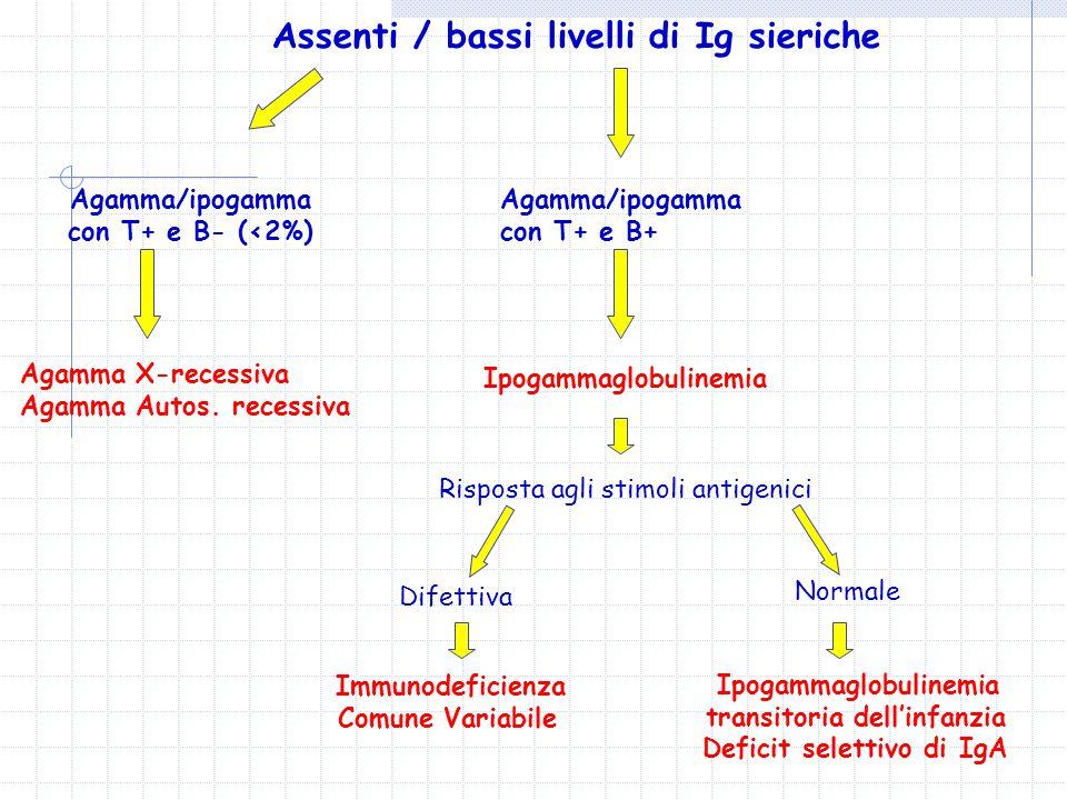 Assenti / bassi livelli di Ig sieriche Immunodeficienza Comune Variabile Agamma/ipogamma con T+ e B- (<2%) Agamma X-recessiva Agamma Autos.