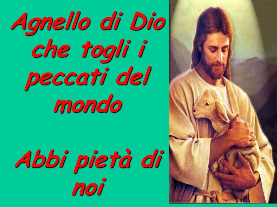 Agnello di Dio che togli i peccati del mondo Abbi pietà di noi