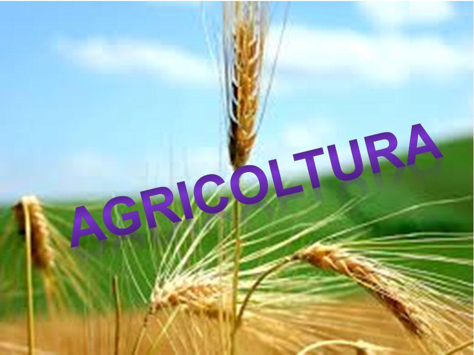 Lo sviluppo economico La percentuale degli abitanti nelle campagne, sia quelle degli occupanti in agricoltura sono in progressiva riproduzione.invece la produzione agricola mondiale aumenta al ritmo di circa 2,5% all'anno.