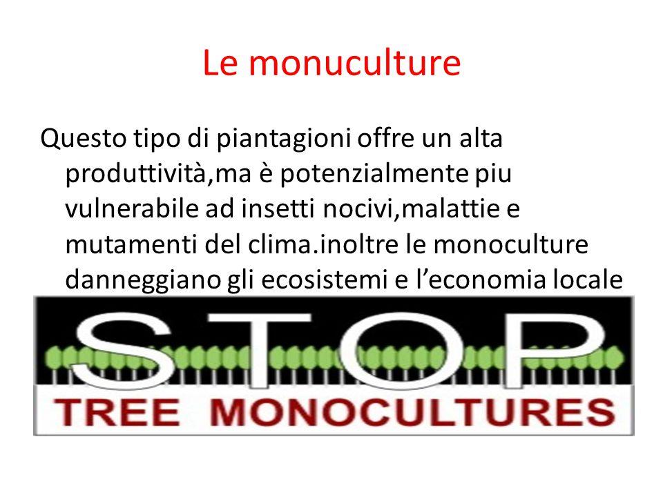 Le monuculture Questo tipo di piantagioni offre un alta produttività,ma è potenzialmente piu vulnerabile ad insetti nocivi,malattie e mutamenti del cl