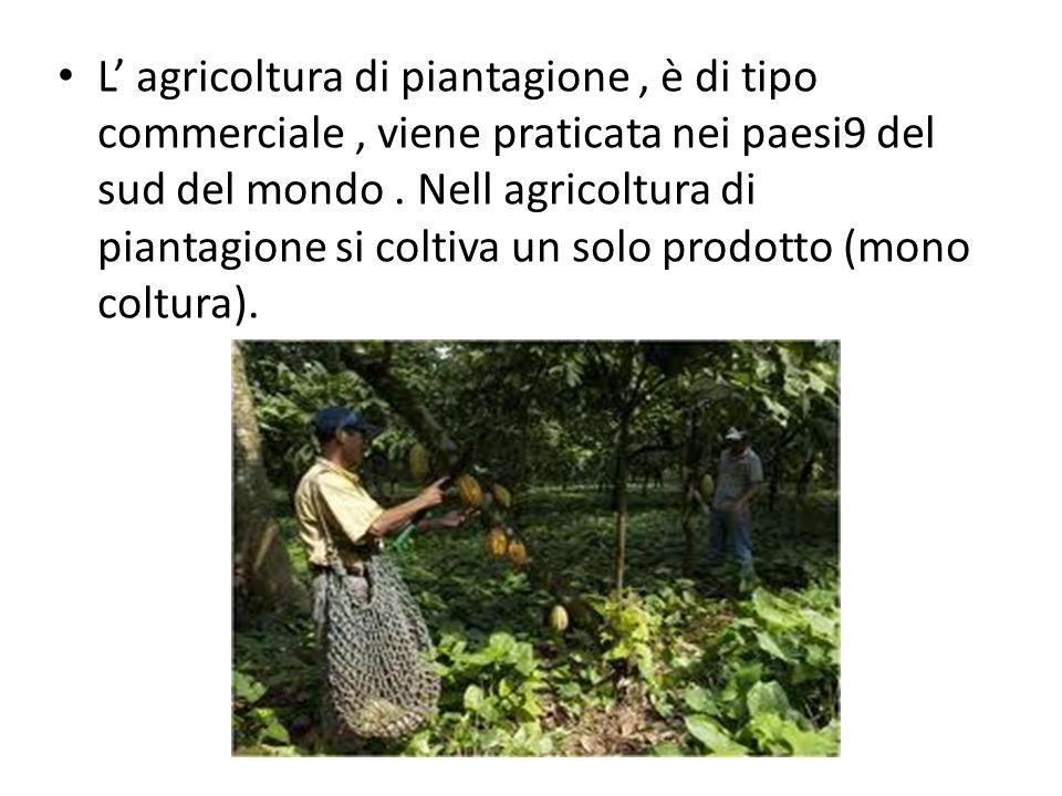 L' agricoltura di piantagione, è di tipo commerciale, viene praticata nei paesi9 del sud del mondo. Nell agricoltura di piantagione si coltiva un solo