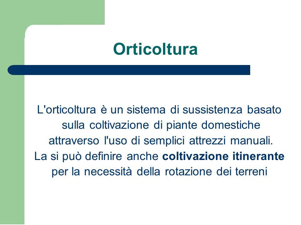 Orticoltura L'orticoltura è un sistema di sussistenza basato sulla coltivazione di piante domestiche attraverso l'uso di semplici attrezzi manuali. La
