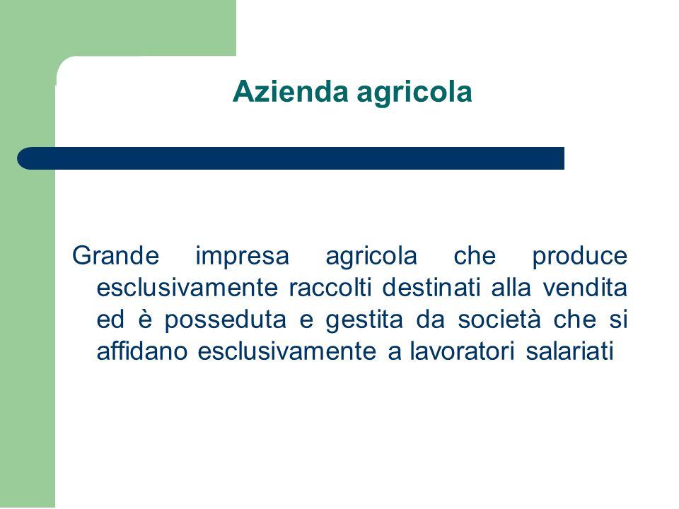 Azienda agricola Grande impresa agricola che produce esclusivamente raccolti destinati alla vendita ed è posseduta e gestita da società che si affidano esclusivamente a lavoratori salariati