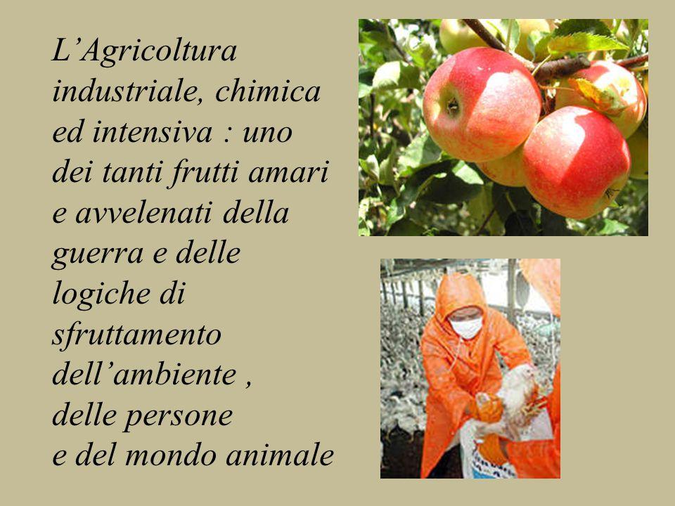L'Agricoltura industriale, chimica ed intensiva : uno dei tanti frutti amari e avvelenati della guerra e delle logiche di sfruttamento dell'ambiente, delle persone e del mondo animale