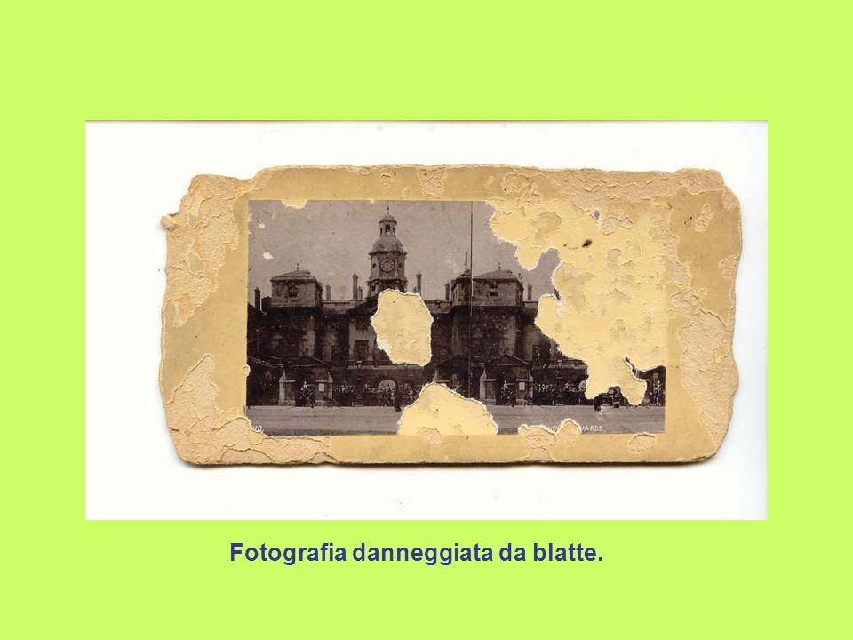 Fotografia danneggiata da blatte.