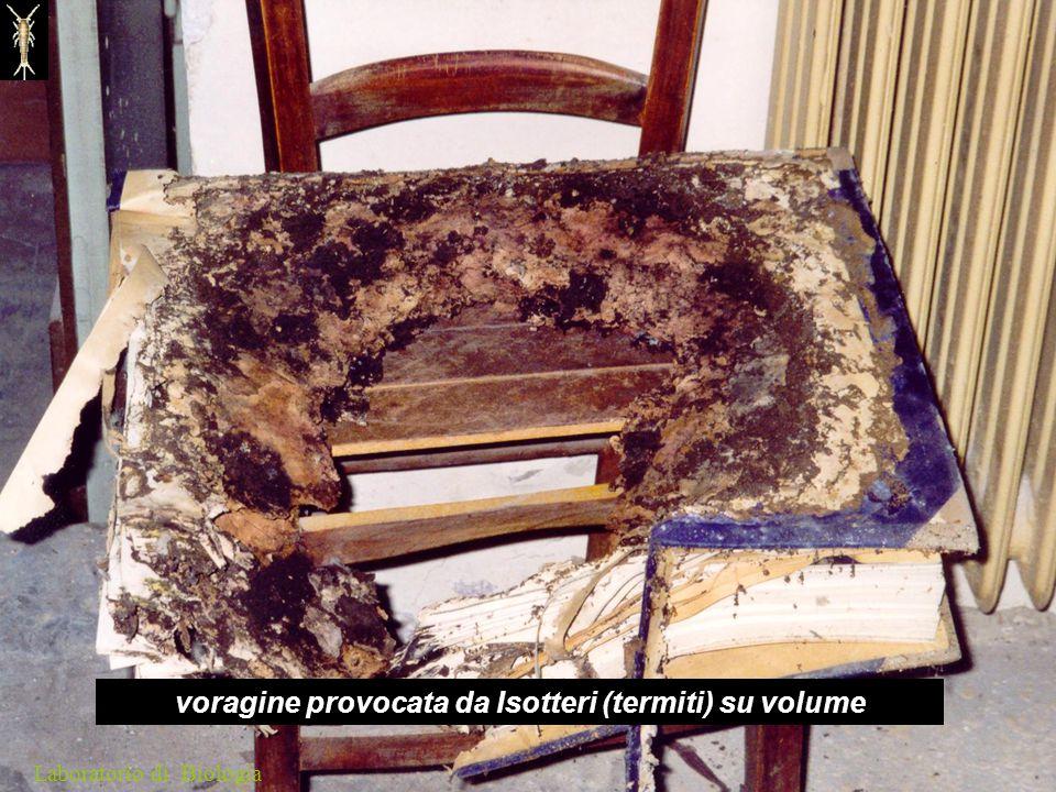 voragine provocata da Isotteri (termiti) su volume Laboratorio di Biologia