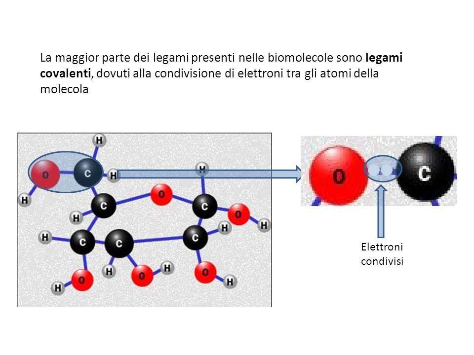 La maggior parte dei legami presenti nelle biomolecole sono legami covalenti, dovuti alla condivisione di elettroni tra gli atomi della molecola Elett