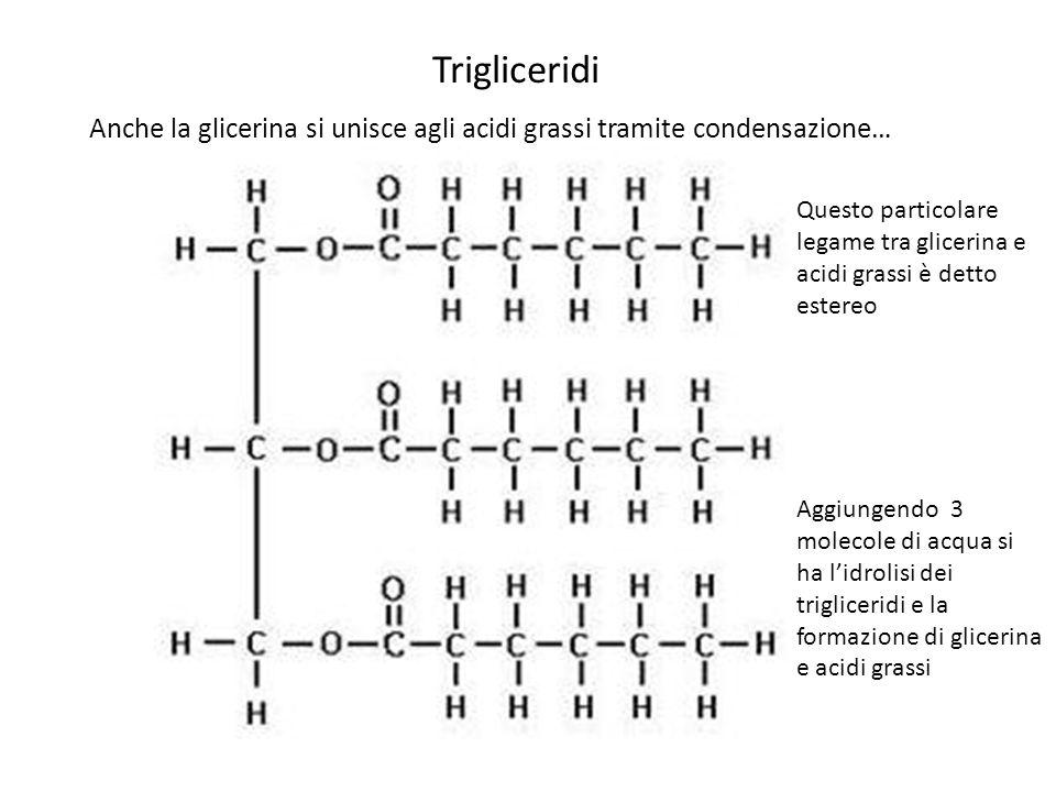 Anche la glicerina si unisce agli acidi grassi tramite condensazione… Trigliceridi Questo particolare legame tra glicerina e acidi grassi è detto este