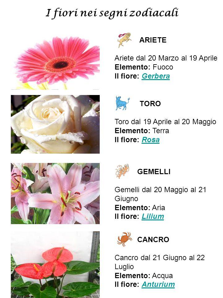 I fiori nei segni zodiacali ARIETE Ariete dal 20 Marzo al 19 Aprile Elemento: Fuoco Il fiore: GerberaGerbera TORO Toro dal 19 Aprile al 20 Maggio Elem