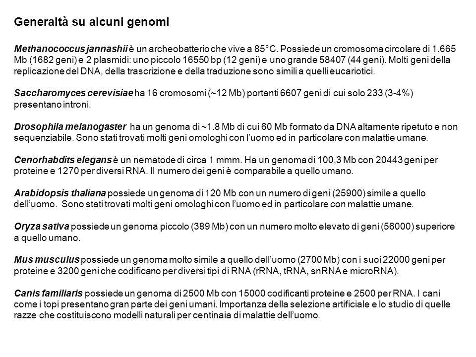 Generaltà su alcuni genomi Methanococcus jannashii è un archeobatterio che vive a 85°C. Possiede un cromosoma circolare di 1.665 Mb (1682 geni) e 2 pl