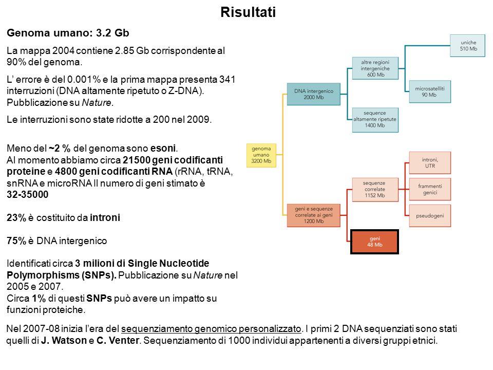 Genoma umano: 3.2 Gb La mappa 2004 contiene 2.85 Gb corrispondente al 90% del genoma. L' errore è del 0.001% e la prima mappa presenta 341 interruzion