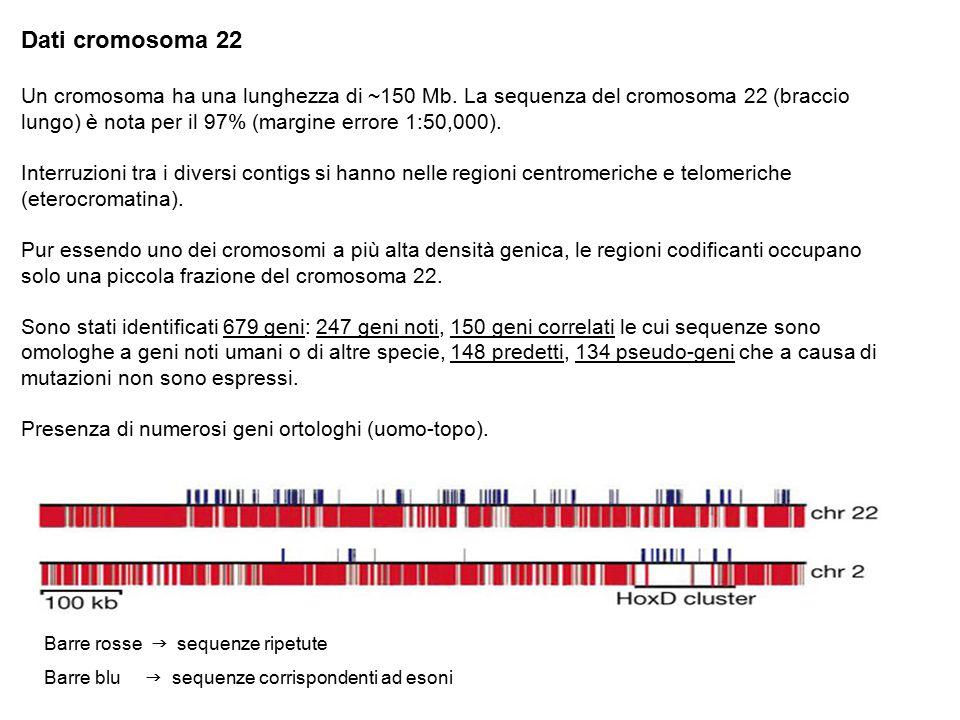 Barre rosse  sequenze ripetute Barre blu  sequenze corrispondenti ad esoni Dati cromosoma 22 Un cromosoma ha una lunghezza di ~150 Mb. La sequenza d