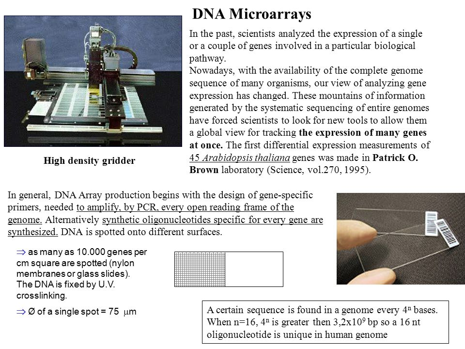 DNA Microarrays  as many as 10.000 genes per cm square are spotted (nylon membranes or glass slides).