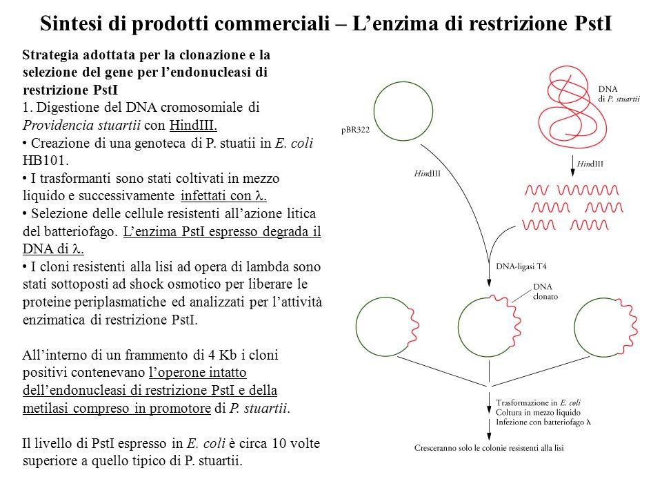 Sintesi di prodotti commerciali – L'enzima di restrizione PstI Strategia adottata per la clonazione e la selezione del gene per l'endonucleasi di rest