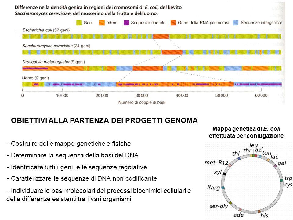 OBIETTIVI ALLA PARTENZA DEI PROGETTI GENOMA - Costruire delle mappe genetiche e fisiche - Determinare la sequenza della basi del DNA - Identificare tu